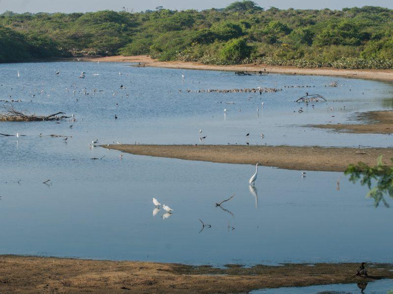 Bundala National Park - Foto Helmut Wizisk