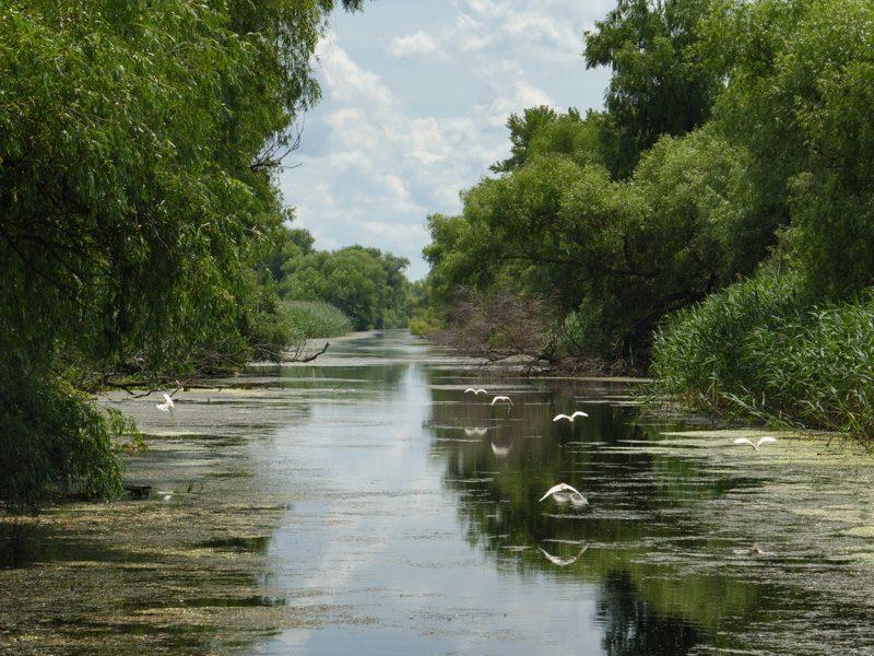 Kanal im Delta - Foto Ulrike Wizisk