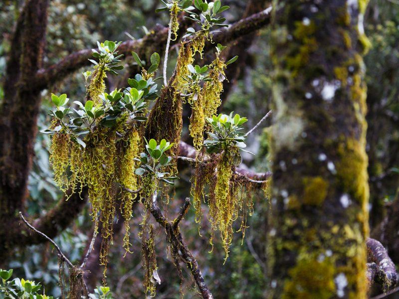 Horton Plains National Park - Foto Ulrike Wizisk