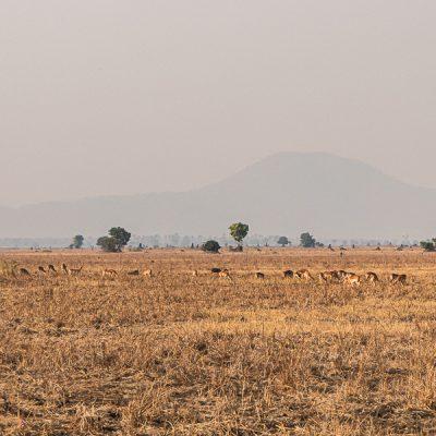 Malawi - Liwonde NP