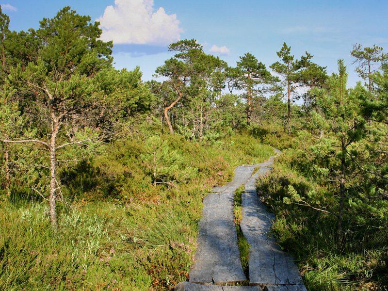 Bohlenweg ins Moor - Foto Ulrike Wizisk