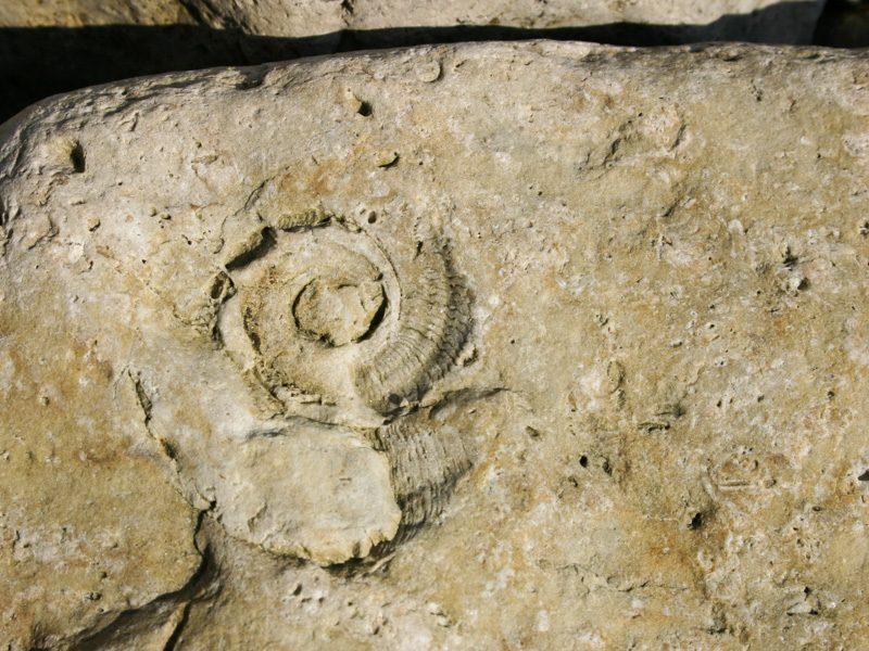 Cephalopode - Foto Ulrike Wizisk