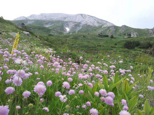 Pirin-Berge - Foto Dimiter Georgiev