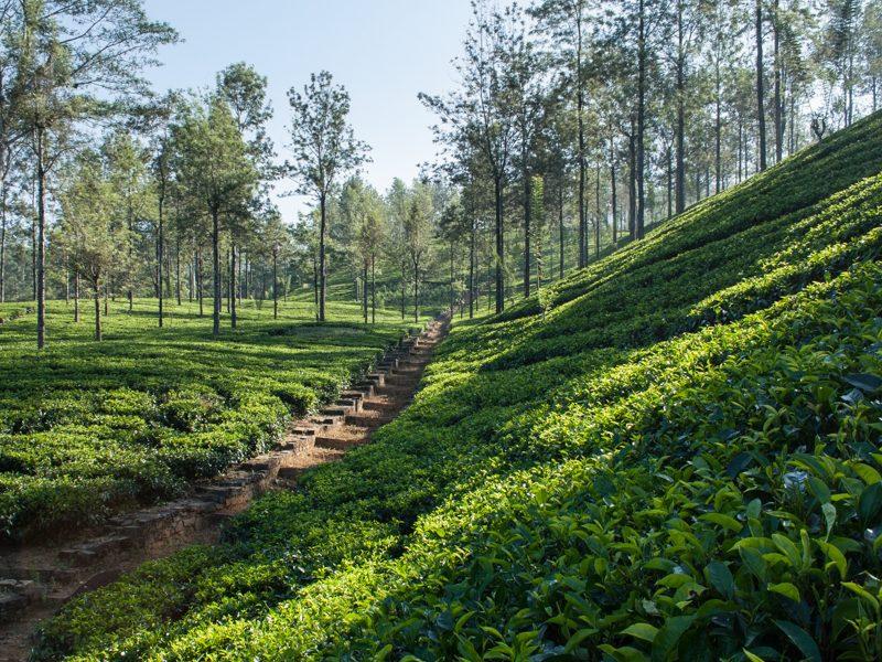 Teegarten - Foto Helmut Wizisk