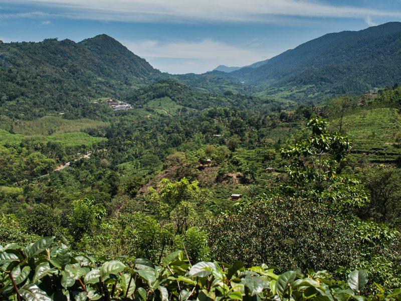 Sinharaja National Park - Foto Helmut Wizisk