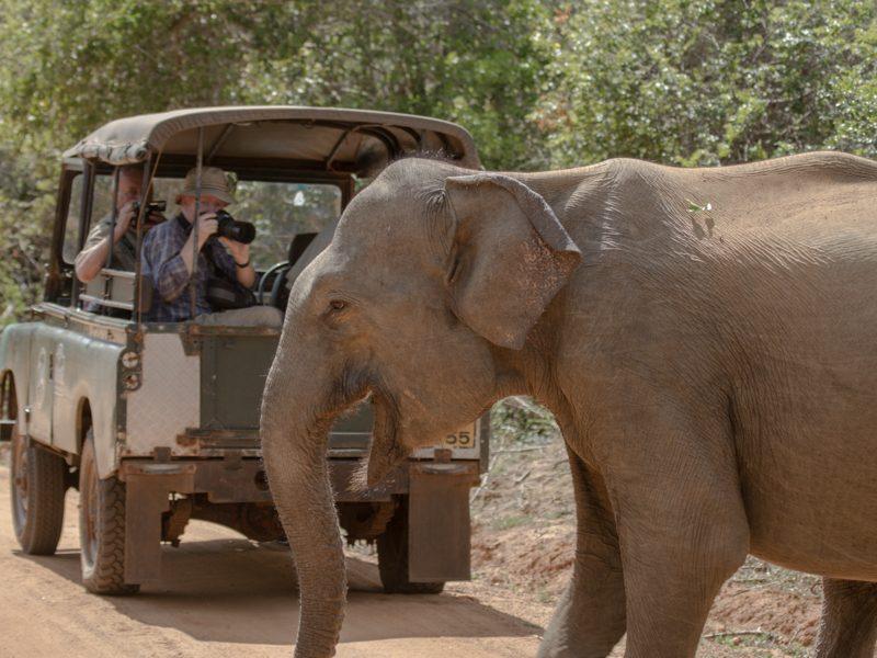 Udawalawe National Park - Foto Ulrike Wizisk